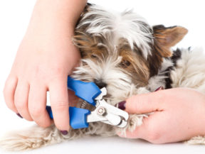 nail care for dogs