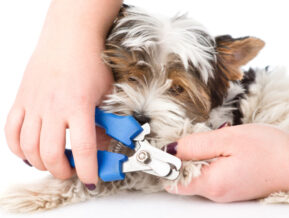 nail trimming for dogs